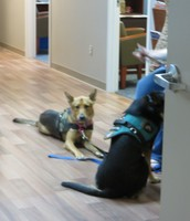 Assistance dogs we saw in the office and hallways