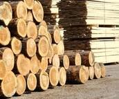 Saw Timber