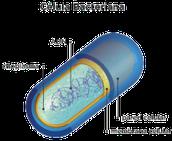 partes de una bacteria