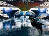 Sea World/ San Antonio; Fun Site
