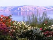 May in Israel- Jaime Read