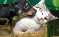 Kitty's and Doggy's :)