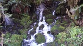 Olympic National Rain Forest
