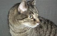 Simon my cat