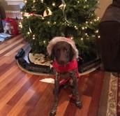 My Dog - Wrigley
