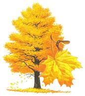 State Tree = Sugar Maple