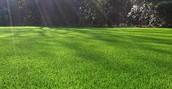 Nice Cushioned Grass