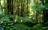 The understory of the rainforest