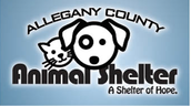 Buy a Bag and help our our amazing animal shelter in Cumberland!