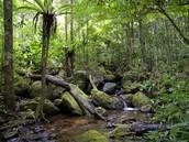 Masoala National Park,