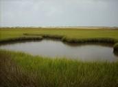 Salt Marsh Photo 3