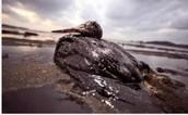 Disadvantages of oil?