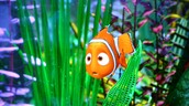 A leader is like nemo