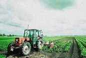 Landbouw&veeteelt