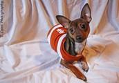 I even offer pet photos!