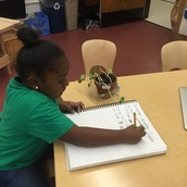 Recording changes in a plant grown from seed.