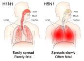 H5N1 vs H1N1