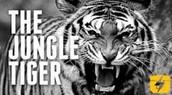 Zoo Tiger/ Jungle Tiger