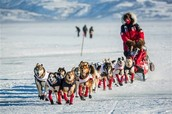 About the Iditarod