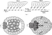 Regenative cells