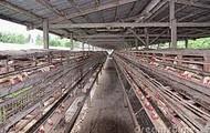 paulrty farm