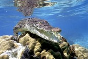 ocean animals I love
