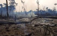 The Amazon Rainforest Deforestation