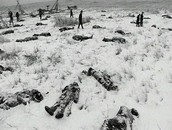 Aftermath of Battle of Wounded Knee