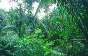 Climate Of The Rainforest