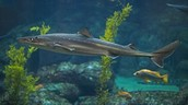 Shark classification: