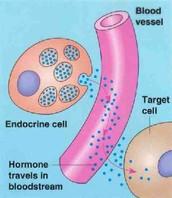 Hormonal Signaling