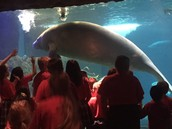 They all loved the manatee.