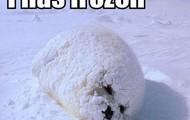 He has frozen