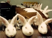 Do thes bunnies deserve to locked up and have there heads cut off for fur?