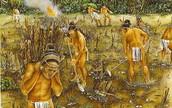 Life of slaves in Maya
