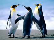 אני ממש אוהבת פינגווינים