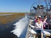 Visit The Everglades
