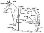 A horse diagram