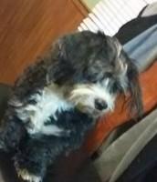Pet Dog, Bilbo
