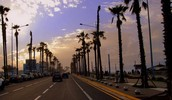 Palm Lined Boulevards