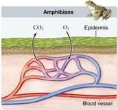 Organism and Adaptations