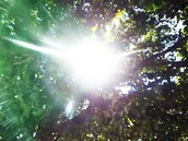 Sunlight Through Branches