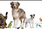 House pets!