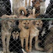 Animal shelters are being overflown,