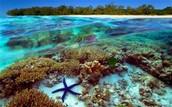 Coral Reefs, oftewel 'Reefz'