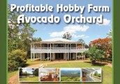 Buy this amazing avacado farm in the heart of the rainforest!
