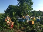 Tolia bereitet seine Bienenvölker zum Umzug vor.