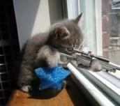 Our cat, Mouschi