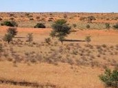This is a part of the Kalahari.