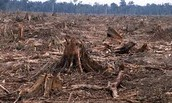 How can Deforestation Decrease the Biodiversity of an area?